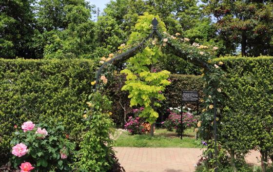 花菜ガーデンの風景 2018年春