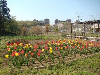 小山内裏公園の風景