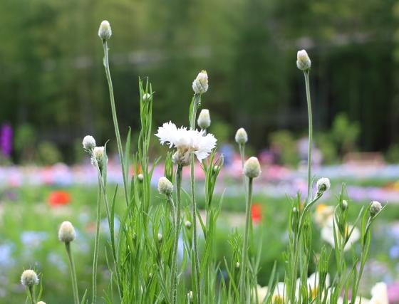 里山ガーデンの風景 春