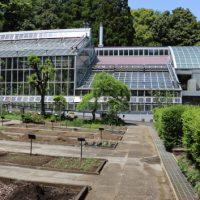 昭和薬科大学・植物園の風景