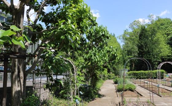 植物園の風景