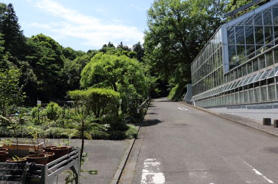 植物園の道路