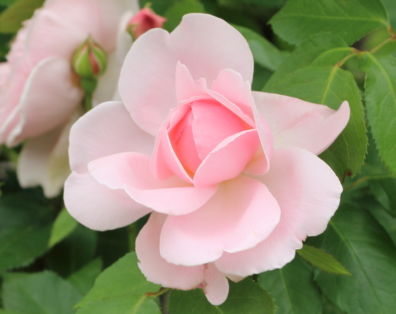 キャスリンモーリーはティー系の芳香がある