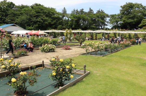 生田緑地ばら苑の風景 春