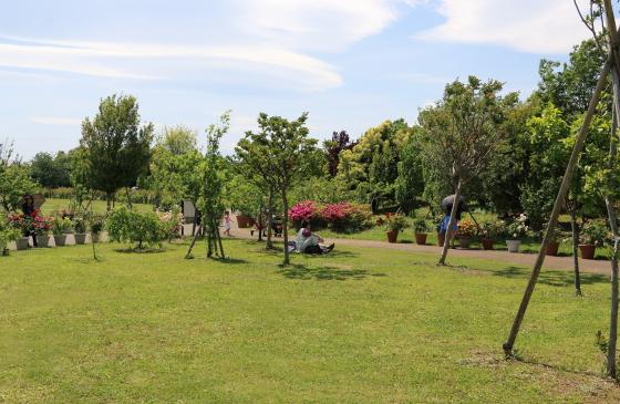 花菜ガーデンの風景 広い芝生