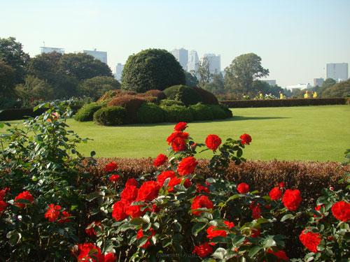 新宿御苑のバラ園