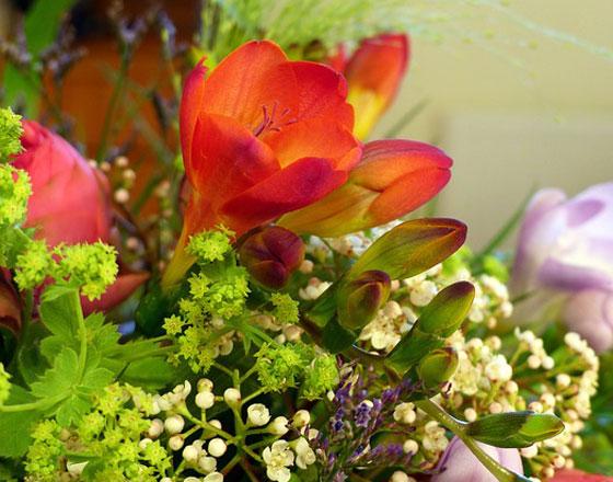 フリージアは甘い香りがある花