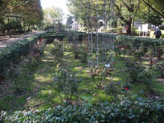 砧公園の秋バラ
