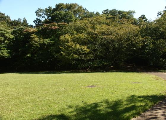 砧公園の芝生広場