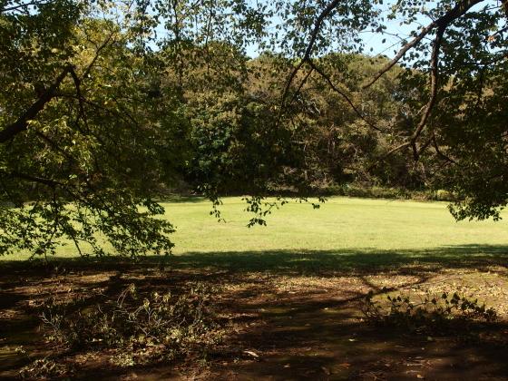 砧公園の木々は先日の台風で枝が折れていた