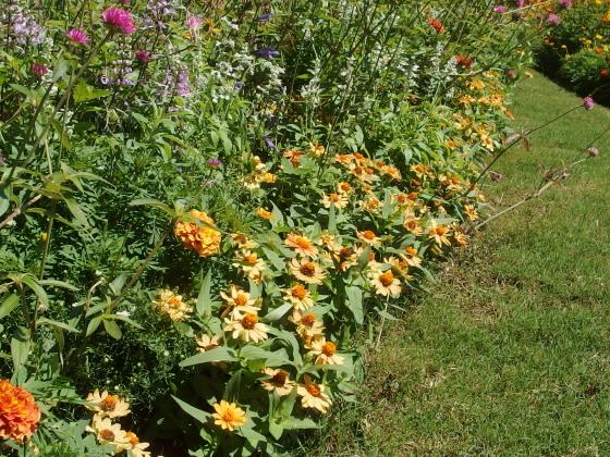 黄色の秋の花