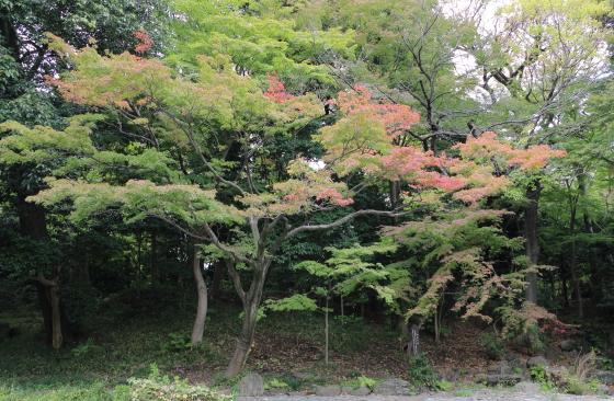 小石川後楽園は江戸時代に作られた