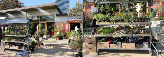 シェアーグリーン南青山は園芸店がある