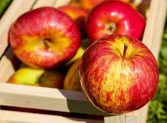 リンゴは果樹です