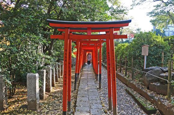 根津神社の乙女稲荷の鳥居