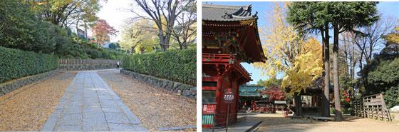 根津神社は鳥居からの参道