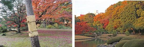 六義園の秋の紅葉風景