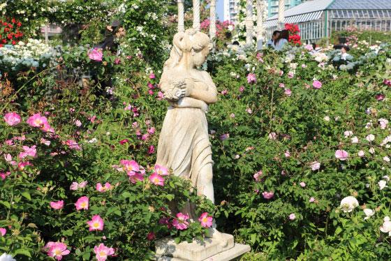 春の京成バラ園にて