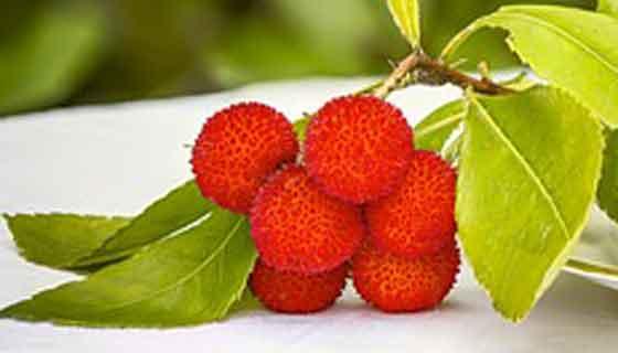 イチゴノキは果実が実る