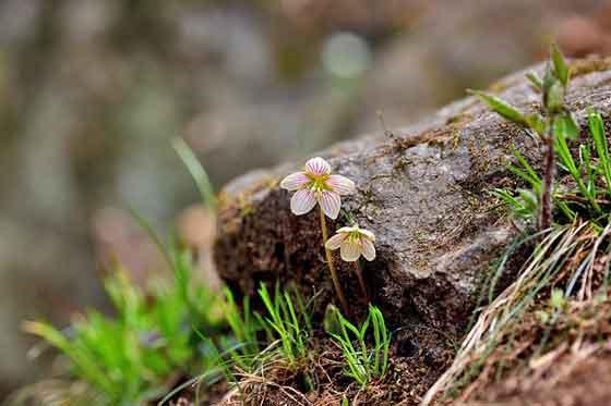 オギザリスは初心者にも育てやすい花