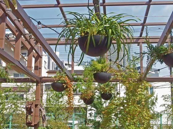 吊り鉢の観葉植物です