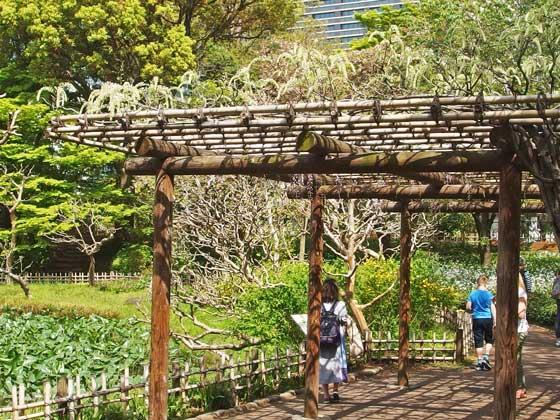 二の丸庭園の藤棚