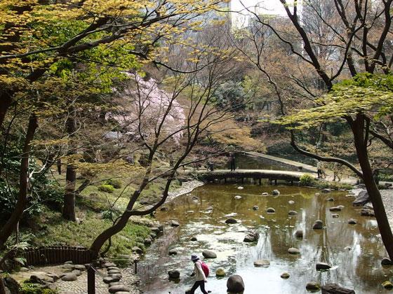 小石川後楽園の花見風景