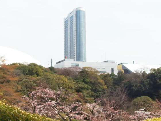 小石川後楽園の桜が満開