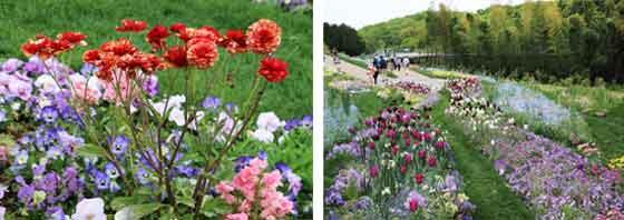 草花の咲くガーデン風景