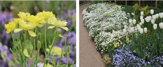 春の草花の咲く風景
