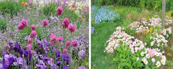 春の草花が咲く風景