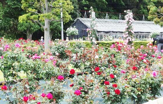 ばら苑の春の風景