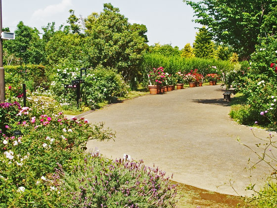 花菜ガーデンの園内は広いですよ