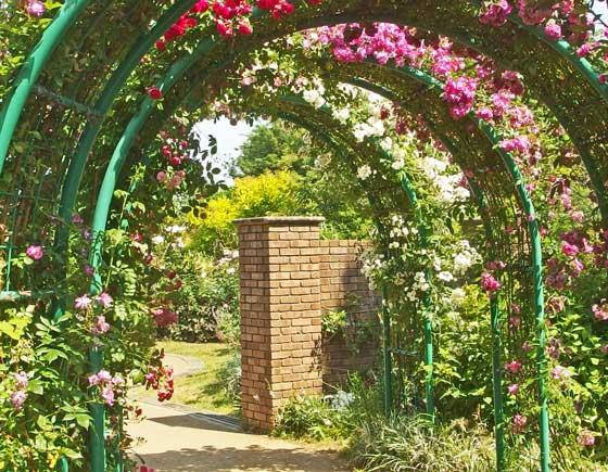 花菜ガーデンの春バラ