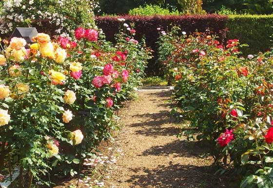 花菜ガーデンの手入れは行き届いている