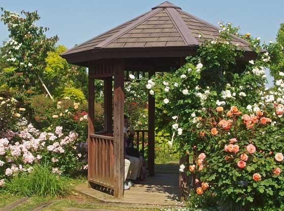 花菜ガーデンの東屋