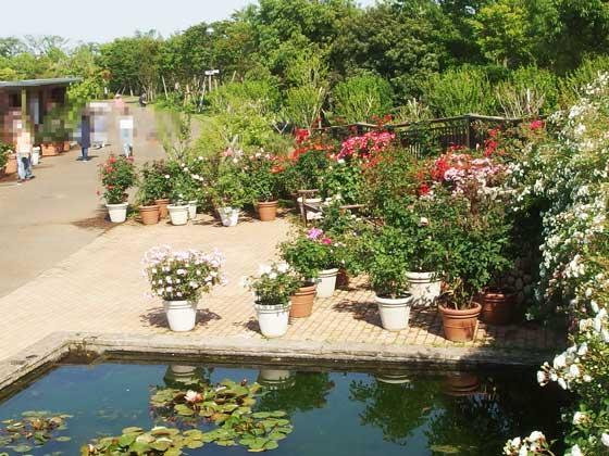 花菜ガーデンの中にある池
