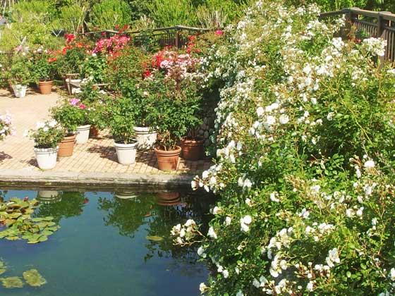 花名ガーデンの風景