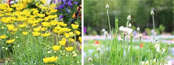 春の植物園の風景