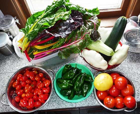 フダンソウは野菜として利用できる