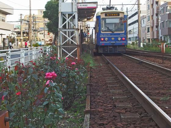 荒川線の電車