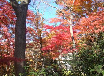 登山路の木々も紅葉している