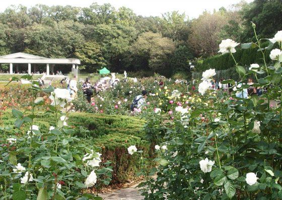 神代植物公園の秋バラ