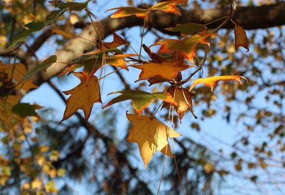 生田緑地の紅葉風景
