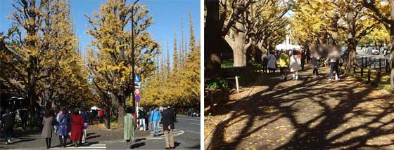 神宮外苑いちょう並木