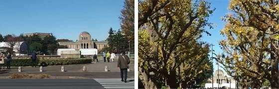 神宮開園いちょう並木