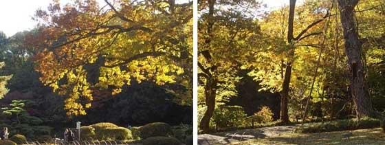 明治神宮の紅葉