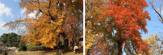 大船フラワーセンターの秋景色