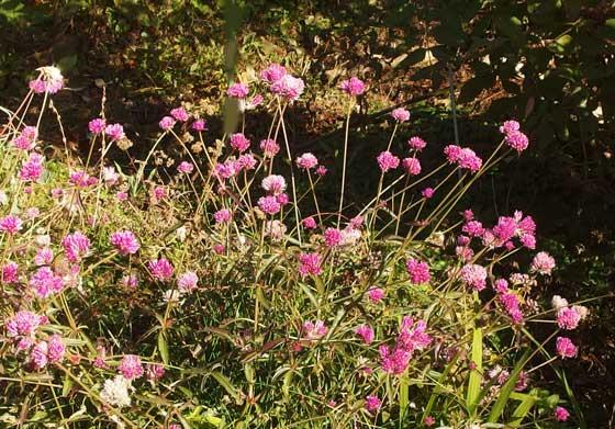 冬に咲く草花