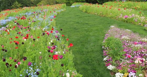 草花の咲く風景
